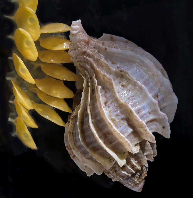 1-caracol-sub-antartico-conservando-la-especie-web